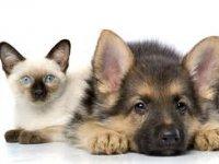 Vaak is de huisdierverzekering niet rendabel