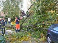 Stormschade in Nederland door zware windstoten tot 110 km per uur