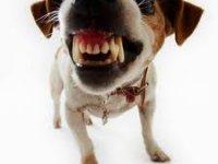 Veel hondenbezitters niet verzekerd voor schade aan anderen
